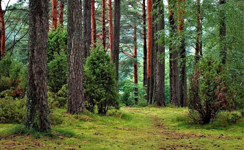 Skogsorganisationer publicerar svar på EU-kommissionens utvärdering avskogsstrategin