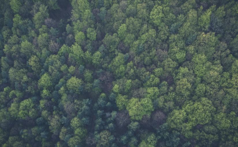 Region Värmland uppmärksammas i ny artikel om samverkan kringbioekonomi