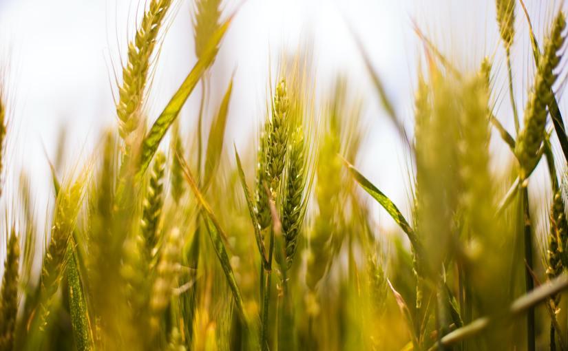 EU-kommissionen presenterar initiativ för ökad ekologiskproduktion